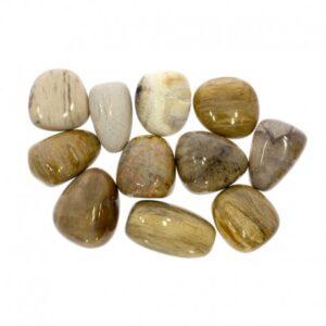 fossiil-puu